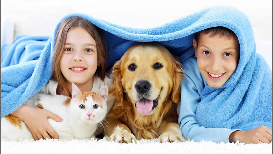 Pet Friendly Flooring For How You Live Bismarck Nd
